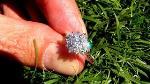 round-created-diamond-35g